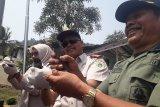 Balai Karantina gagalkan pengiriman 910 ekor satwa liar