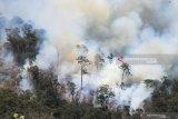 Lima hektar lahan gambut milik pemerintah ikut terbakar