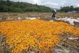 Surplus produksi jagung nasional