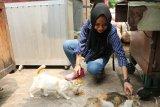 Cahaya bagi kucing jalanan tak bertuan di Ibu Kota