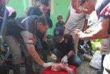 Mahasiswa Polbangtan YoMa cek hewan kurban di Wonosobo