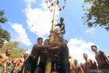 Prajurit Korps Marinir TNI AL dan Marinir Amerika Serikat (USMC) mengikuti perlombaan panjat pinang saat memeriahkan HUT ke-74 Kemerdekaan RI di Hutan Selogiri, Ketapang, Banyuwangi, Jawa Timur, Sabtu (17/8/2019). Gelaran perlombaan menyemarakan Hari Kemerdekaan Indonesia oleh Prajurit yang tergabung dalam Latihan Bersama Platoon Exchange (Platex) di medan latihan tersebut, diharapkan dapat meningkatkan profesionalisme dan kerjasama Marinir kedua negara. Antara Jatim/Budi Candra Setya/zk.