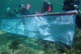 BUMN Hadir Untuk Negeri tanam bibit terumbu karang di Pulau Karampuang