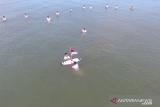 Puluhan Peselancar di Pariaman Gelar Upacara di Laut