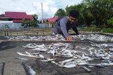Produksi ikan asin di Agam berkurang hingga 50 persen