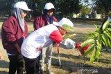 SMN 2019 - Peserta SMN Riau ikut tanam bibit pohon kenari di Prambanan