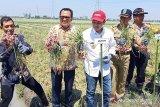 BI dukung pemanfaatan bahan organik tanam bawang merah