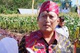 Ribuan hektare padi di Kotim gagal panen