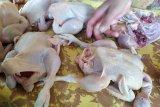 Meski Idul Adha telah berlalu harga ayam potong di Bandarlampung belum turun