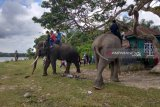 Bengkulu luncurkan koridor gajah sumatera