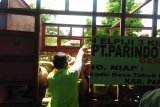 Pertamina jamin stok elpiji bersubsidi di Sulteng aman