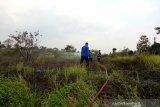 Seluas 5.500 meter persegi  lahan terbakar selama Agustus