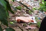 Warga temukan mayat bayi tersangkut di ranting pinggir sungai