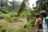 BKSDA: serangan buaya di Sungai Batang Anggang Agam akibat warga mengusik habitatnya