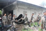 Sabung Ayam resahkan warga Padang, Satpol PP sita arena pertandingan