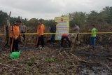 Polisi tahan lima pelaku  bakar lahan  milik pedagang sapi di Muara Teweh