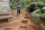 12 ekor gajah liar  berkeliaran di permukiman warga Nagan Raya