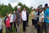 Dewan nasional KEK cek kesiapan infrastruktur KEK Mandailing Natal di Sumut