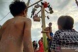 Anak-anak di Nunu lomba panjat pohon pisang gantung