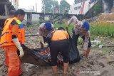 VIDEO - Mayat perempuan mengapung di dekat dermaga Pelindo 1 Pekanbaru, korban pembunuhan?