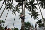 Lomba panjat kelapa tradisional di Parigi