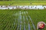 Petani di Mataram diajak masuk asuransi usaha tani pangan