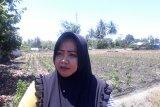 Wanita tani Sigi di Dolo terkendala air kembangkan pertanian