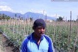 FAO bantu petani Pasigala jadikan hortikultura sumber pendapatan