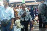 Penurunan harga ayam hidup dikeluhkan kembali oleh Pinsar