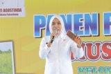 Palembang alokasikan Rp2 miliar  untuk pertahankan keberadaan sawah