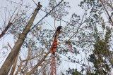 Korban meninggal tersengat listrik di atas pohon dievakuasi