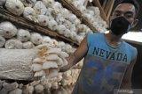 Dosen temukan program inovatif mikroponik untuk jamur tiram