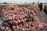 Harga bawang merah di Baturaja anjlok
