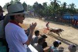 Lomba karapan roda sapi tradisional digelar di Pulubala