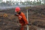 Waduh, kebun pinang dan jahe di Pekanbaru ludes akibat kebakaran lahan