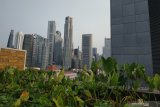 Atap gedung disulap jadi kebun di Singapura