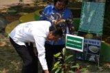 Presiden Jokowi tanam durian serumbut di Taman Digulis Untan Pontianak