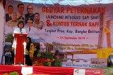 Bangka Belitung jadi daerah lumbung ternak sapi potong