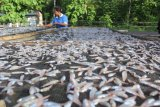Bumdes Hadakewa dapat bantuan Rp400 juta kembangkan usaha ikan teri