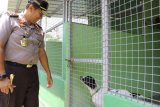 Kapolda Lampung kunjungi Sumatera Wildlife Center