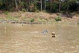 Seorang penambang pasir tenggelam di sungai