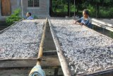 China berminat terhadap Teri Hadakewa, namun produksinya belum cukup