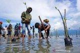 Ahli rekomendasikan agar dampak tsunami diperkecil dengan tanaman bakau