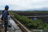 Kulon Progo mengusulkan bantuan traktor roda empat bagi petani Srikayangan