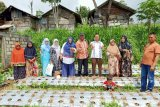 UMMY Lecturer Solok introduces certified shallot cultivation