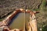 Sekitar 7.000 hektare lahan pertanian di Sigi terlantar