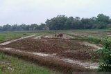 Ribuan hektare sawah di Kota Metro segera tanam padi September ini