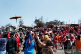 Wisatawan Pantai Glagah berebut gunungan Labuhan Puro Pakualam