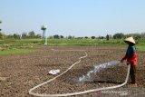 Kekeringan, petani bikin sumur bor berbiaya Rp5 juta