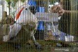 Burung-burung langka hendak diselundupkan dari Sulawesi ke Surabaya